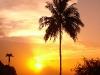 Cuba Palm Tree