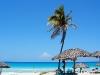 Cuba Palm on the Beach