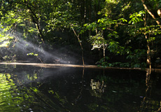 Amazon ormanlarında neler oluyor