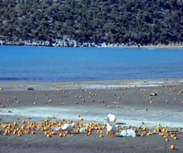 Kömürlük Plajı