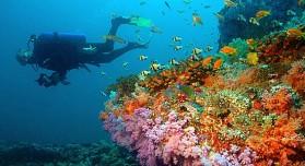 Maldivler Su Altı
