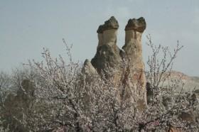 Kapadokya'da peribacaları çiçek açtı