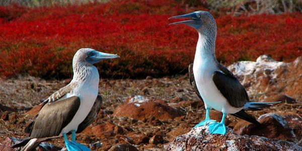 Galapagos-Adaları-