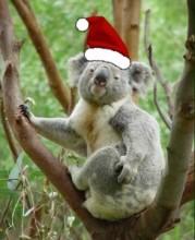 Noel-baba-Koala