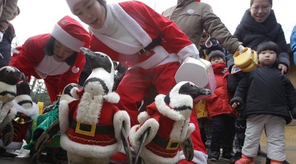 Güney Kore'nin penguen geçidi