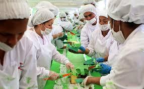kolombiya yeşil kek
