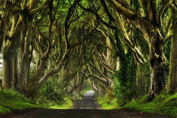 kuzey-irlanda-karanlik-orman-yol