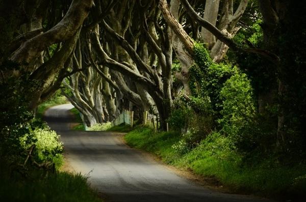 kuzey-irlanda-karanlik-orman