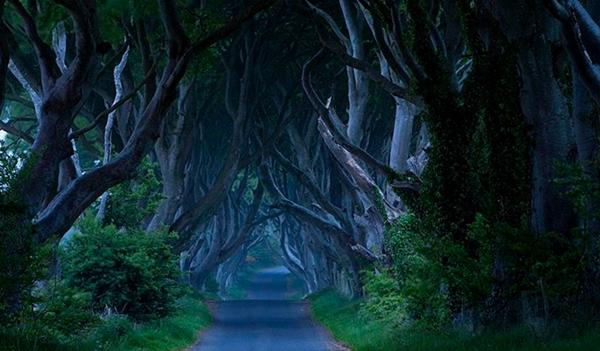 kuzey-irlanda-karanlik-ormani