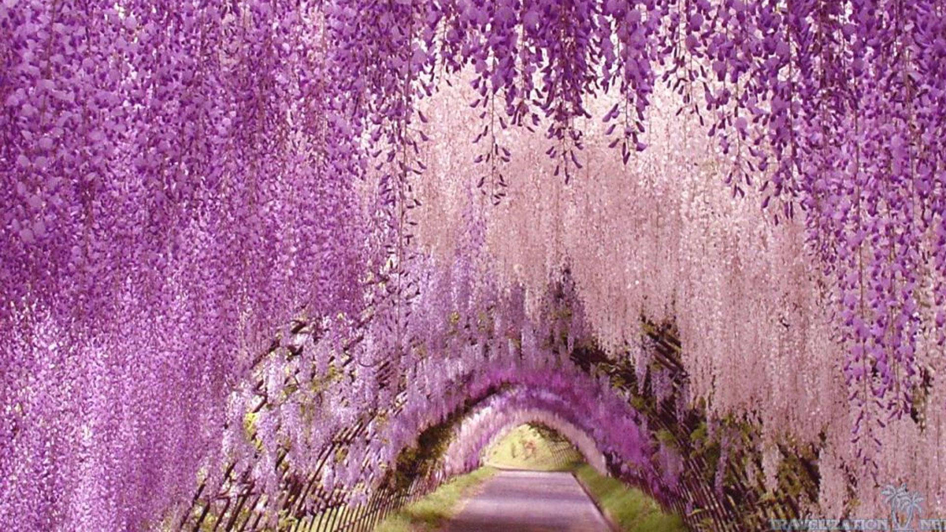 wallpaper-Ashikaga-flower-park-awesome
