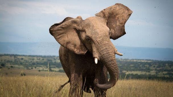 afrika-tanzanya-serengeti