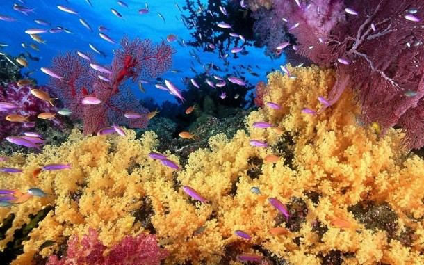 avustralya-mercan-resifi