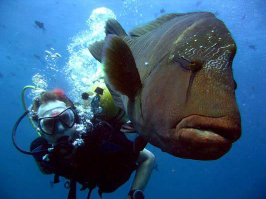Maldivler Dalış Turu