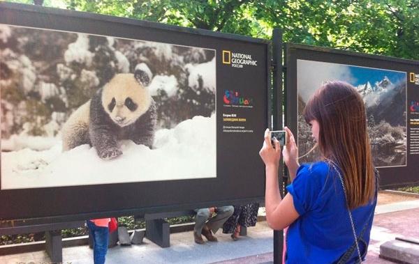 rusya-panda-sergisi