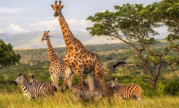 Afrika tanzanya
