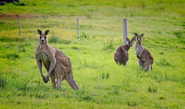 Avustralya hakkında ilginç gerçekler