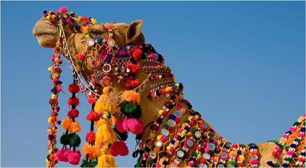 Pushkar Festivali