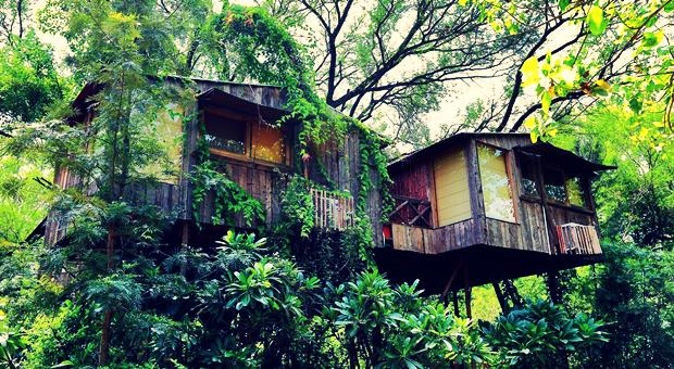 Hindistan ağaç ev otelleri