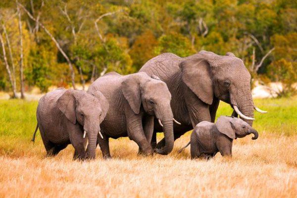 Mozambik Turları Safari