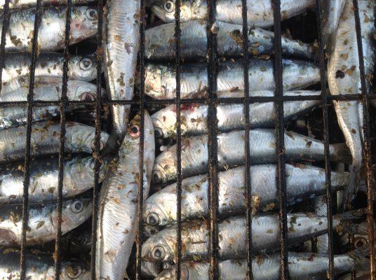 Balıkçılık Bayramı