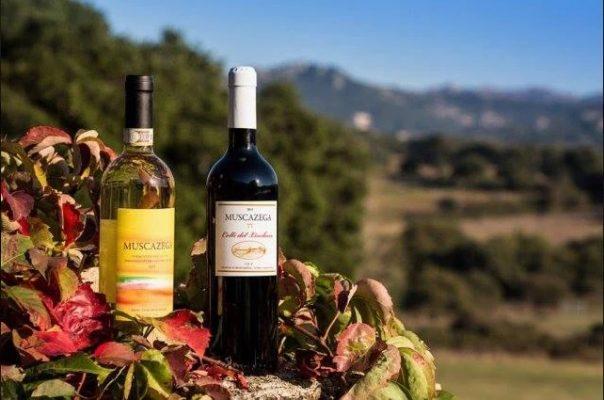 Sardinya Şarapları