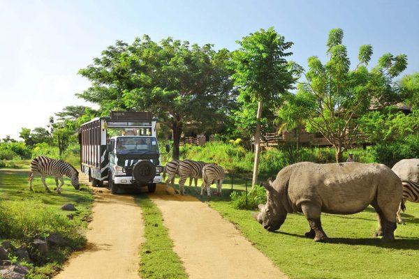 Bali Safari ve Marina Parkı
