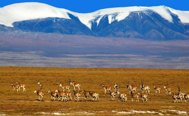 Qinghai Hoh Xil Çin