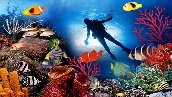 Maldivler mercan kayaliklari