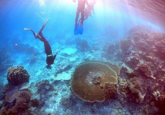 Avustralya'dan Büyük Set Resifi için 400 milyon dolar!