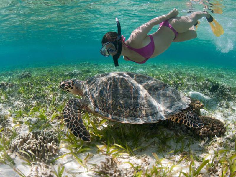 Dev kaplumbağaların adası Turtle Island