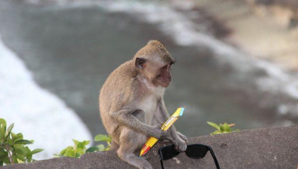 Uluwatu tapinağında maymunlara dikkat edin