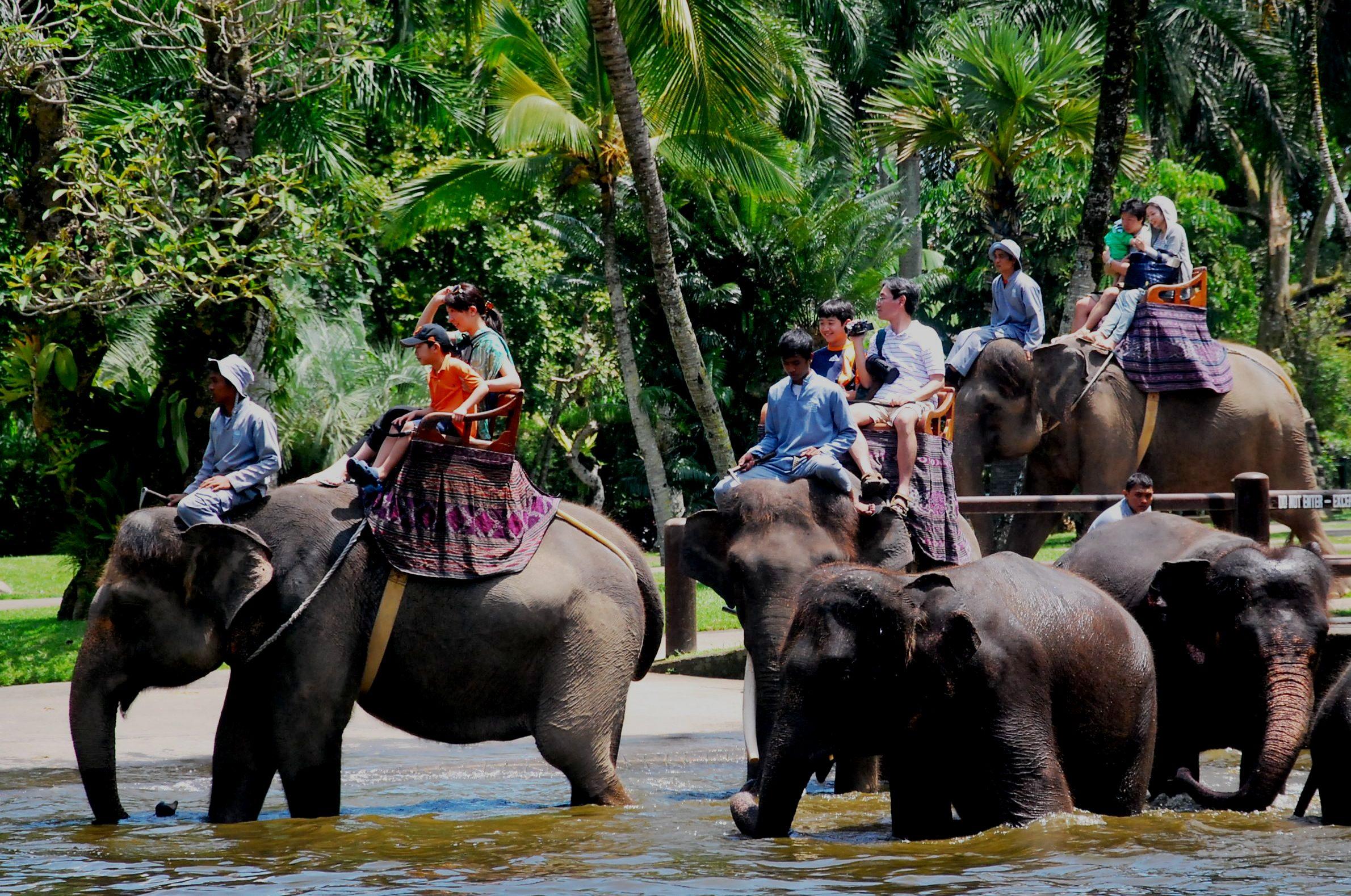 Bali'de fil safarisine katılın