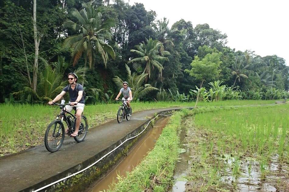 Ubud'da pirinç tarlaları arasında bisiklet turu yapın