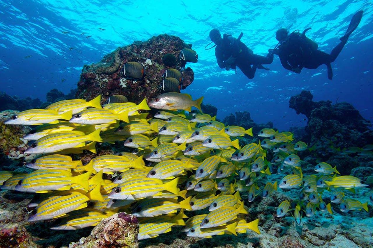 En iyi balayı için Maldivlerde dalış yapın