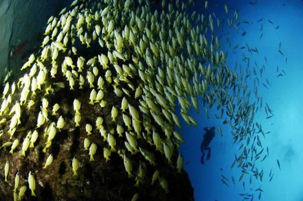 Mauritius  Belle Mare dalış için çok ideal