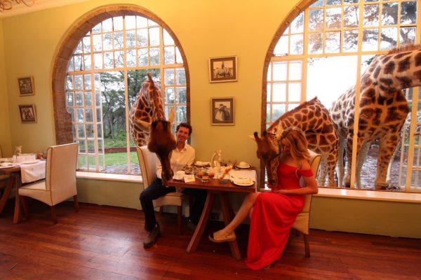 Nairobi Kenya Giraffe Manor lüks balayı tatilinde zürafalarla tanışın