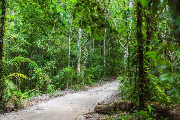 Pemba'nın kalbi: Ngezi Orman Rezervii