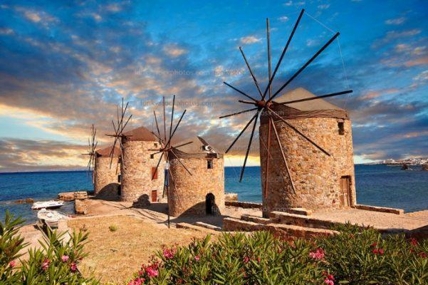 Ağacı ile dünyaca ünlü Sakız Adası