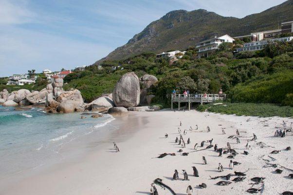 İnstagram'a göre Dünyanın En İyi 10 Plajı Boulders Güney Afrika