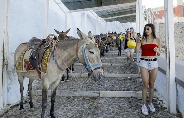 Yunan Adası Santorini'de obez turistler eşekleri sakatlıyor