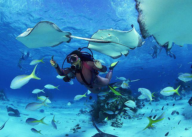Seyşeller'de tüple dalış yapın