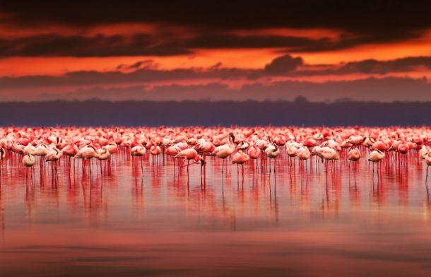 Flamingoları ile ünlü Tuz gölü turistleri çekiyor