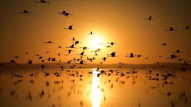 Turistler Flamingo cenneti Tuz Gölü'ne akın ediyor