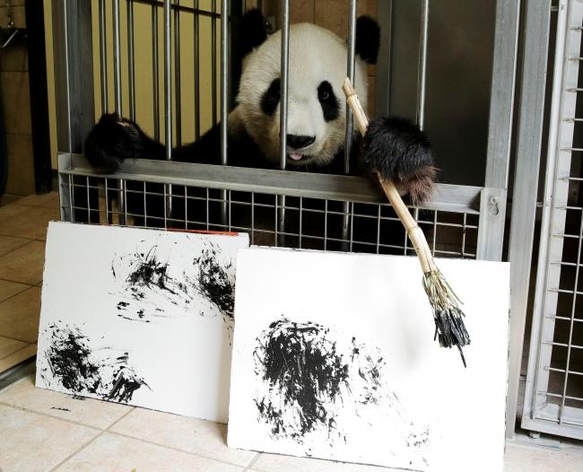 Viyana'nın sanatçı pandası Yang Yang