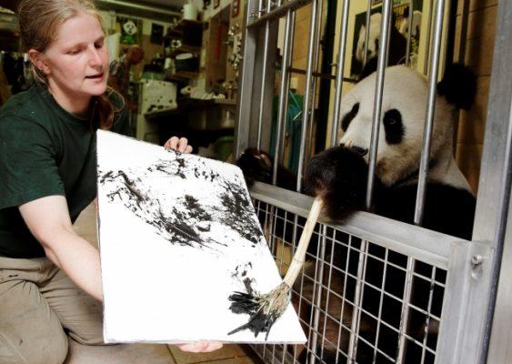 Viyana'nın sanatçı pandası Yang Yang resim yapıyor