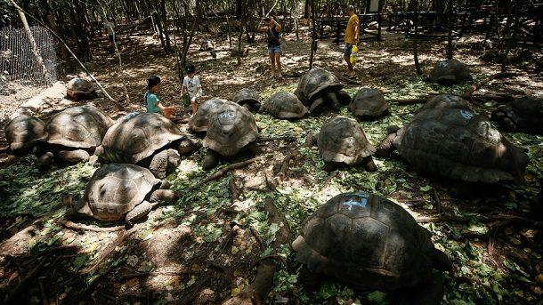 Prison Island ya da Kaplumbağa Adası olarak biliniyor