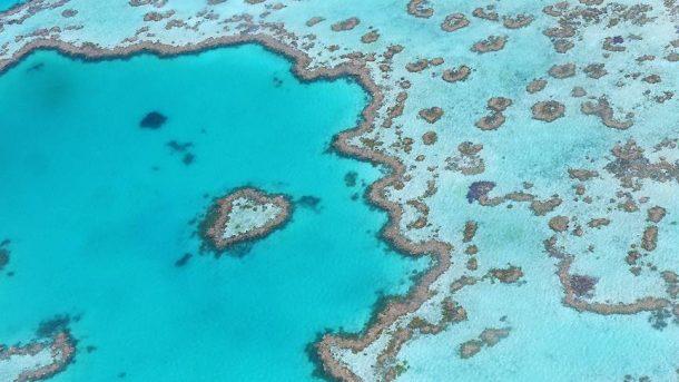 Avustralya'da Büyük Set Resifi robotlara emanet ediliyor!