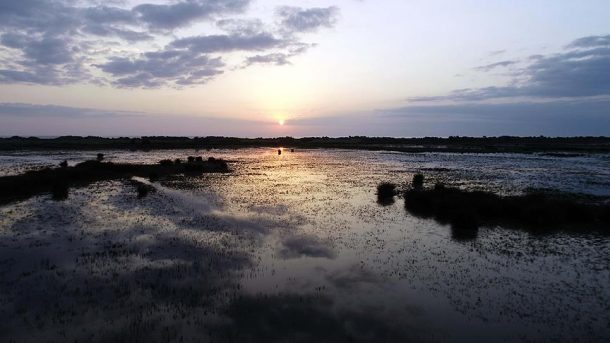 Kızılırmak Deltası Kuş Cenneti UNESCO yolunda ilerliyor!