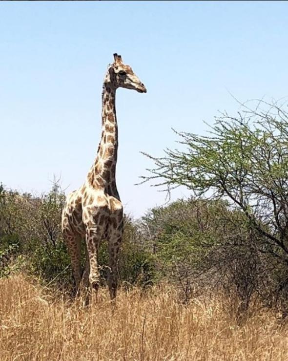 Pınar Altuğ Afrika tatilindeki safariden fotoğraf paylaştı