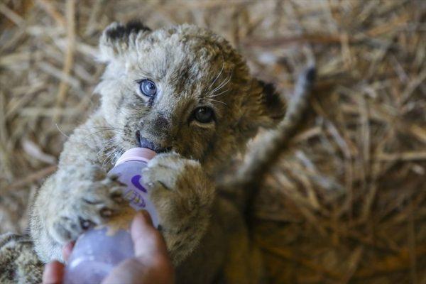 Tuzla aslan Parkı açıldı